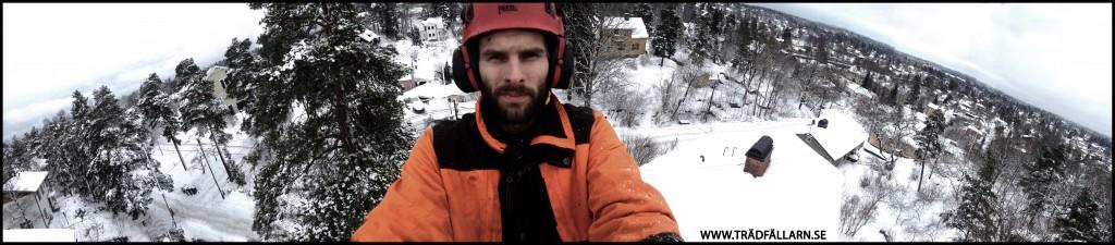 Trädfällarn.se Erik Roos Sektionsfällning trädfällning stockholm