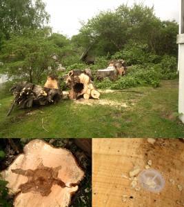 Trädfällning i Bromma traneberg sundbyberg solna