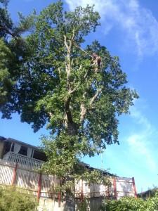 Jobbar mig runt trädet.