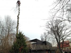 Trädfällning av en dödbjörk i Hägersten. Kontakta oss för kostnadsfri offert eller rådgivning.
