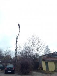 Trädfällning i Södertälje, rosenlund, ritorp, oxelgrenshagen, brunnsäng, tallhöjden, skogsäng