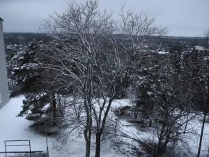 trädfällning-stockholm-vinter-snö-rågsved-hökarängen-hägersten-enskede-årsta-svedmyra