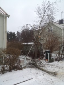 trädfällning-trädvård-trädfällare-enskede-årsta-liljeholmen.JPG