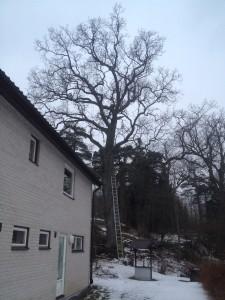 Ågesta-Farsta-farstastrand-trångsund-skogås-larsboda-magelungen