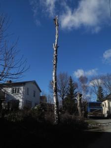 Trädfällning i Segeltorp, fruängen, herrängen, långbro.