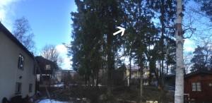 Enskede-svedmyra-bandhagen-årsta-stureby-östberga-tallkrogen-trädfällning-fällaträd-trädfällare