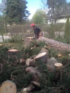 Trädfällning i Spånga, bromma, alvik, johannelund, hässelby, vällingby, råcksta