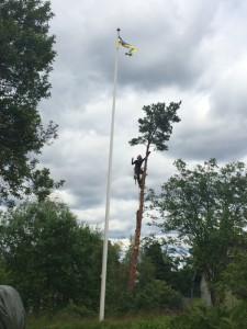Trädfällning i toppen trädfällare i stockholm, trädfällarn trädfällarna