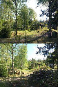 Trädfällare i gladökvarn, huddinge, nyboviksvägen