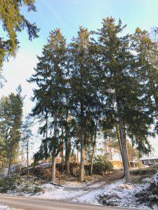 Trädfällare i gladö kvarn, gladövägen 41,2
