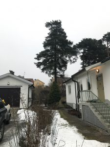sektionsfällning Trädfällning enskedegård kålgårdsvägen
