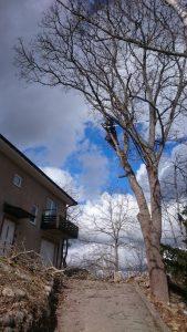 Trädfällning huddinge balingsnäs